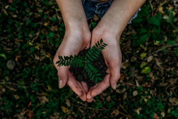 สองมือเปล่าที่ถือต้นไม้ขนาดเล็กไว้